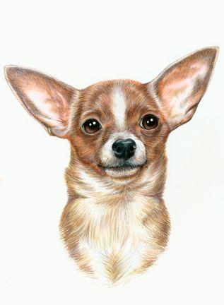 Chihuahua Dog Portrait By Bigcatdesigns Deviantart Com On