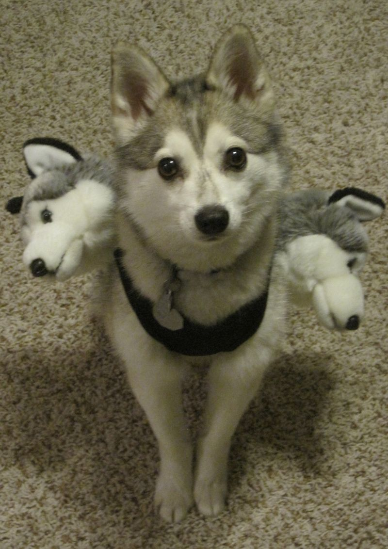 25 Crazy Pet Costumes That Put Yours to Shame | Best Pet costumes ...