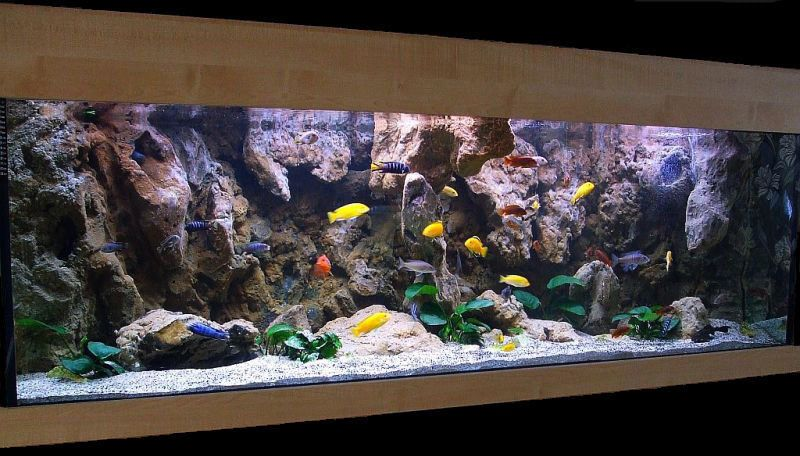 Cichlid tank i want 3d background aquariums for African cichlid tank decoration