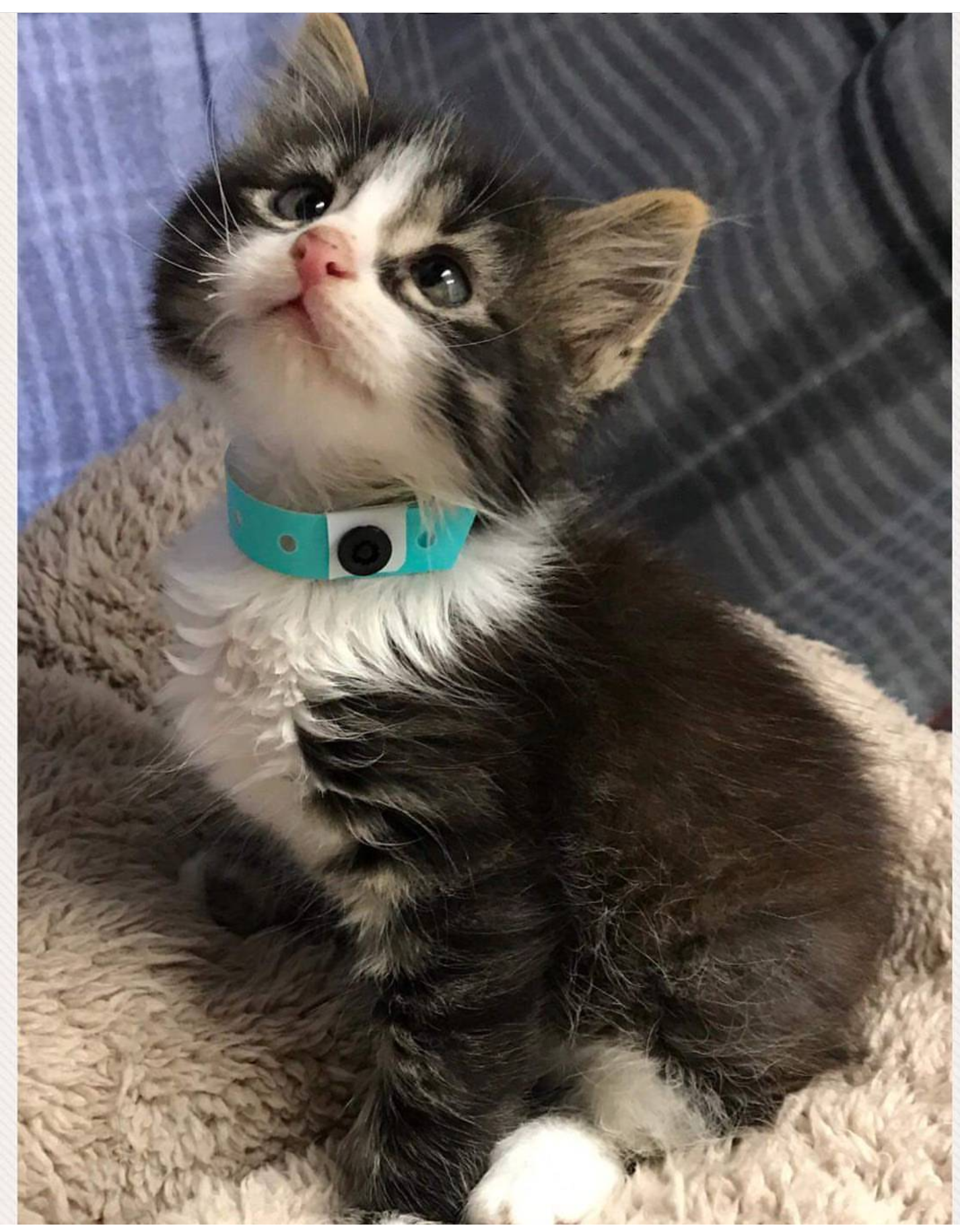 Derp the crosseyed kitten waited for 23weeks at a shelter