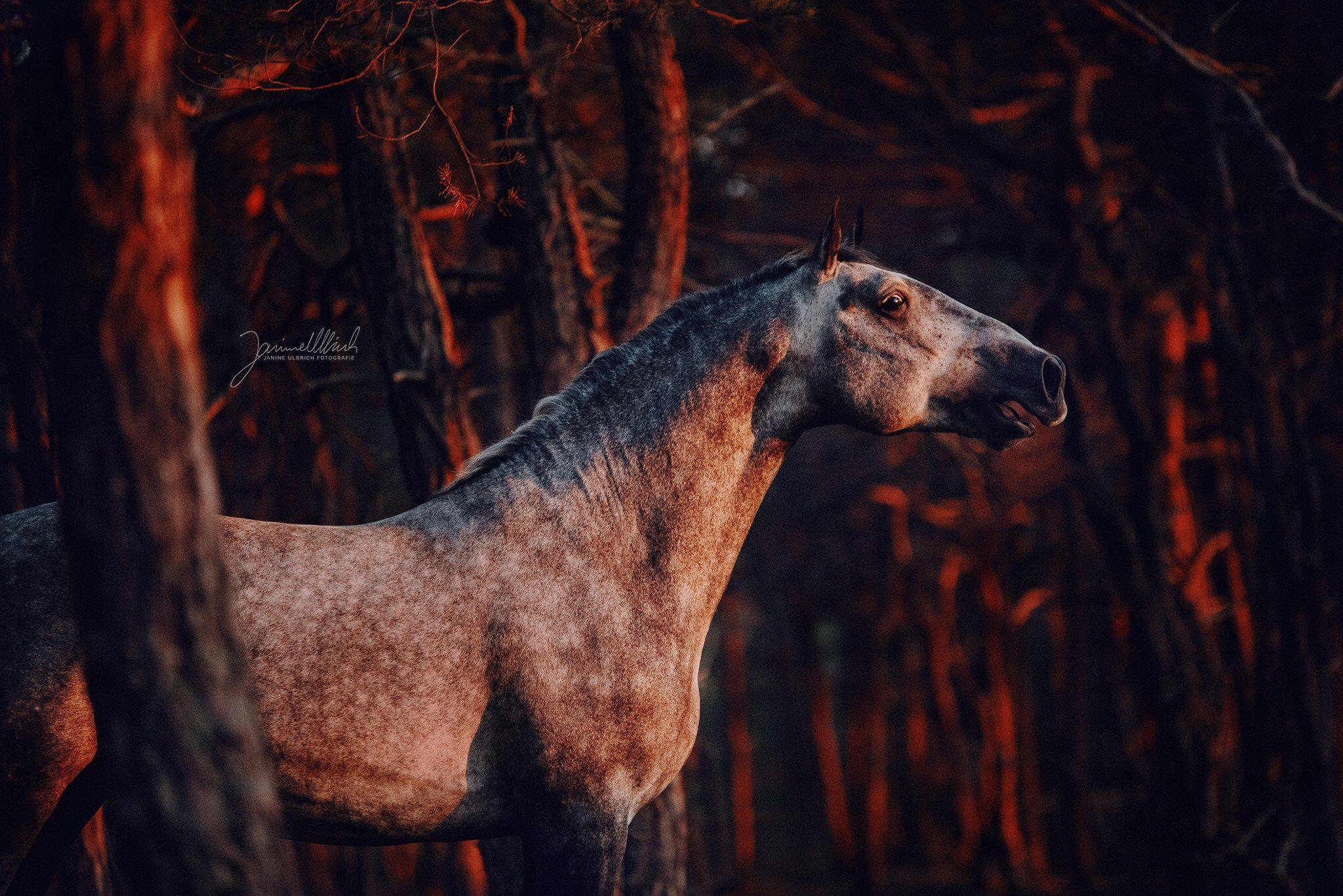 Wie Ein Drache Aus Der Glut 3 Pferdebilder Pferdefotografie Pferdewelt Pferde Fotografie Pferde Wallpaper Muster Pferd