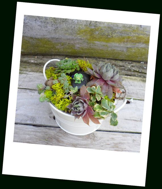 Succulent Cream Color Dish Garden with a garden by SucculentJungle