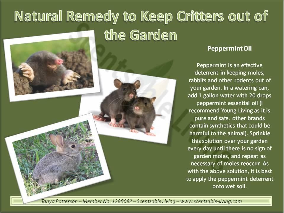 I had several questions yesterday on rodent control we - How to keep deer out of garden home remedies ...