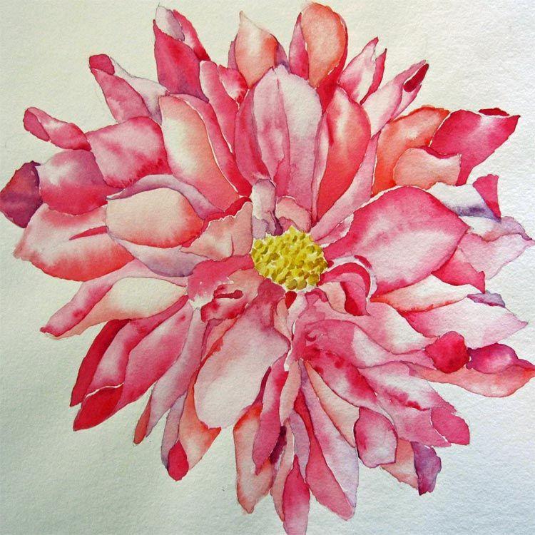 Watercolor Dahlia Dahlia Watercolor Thank You Cards From