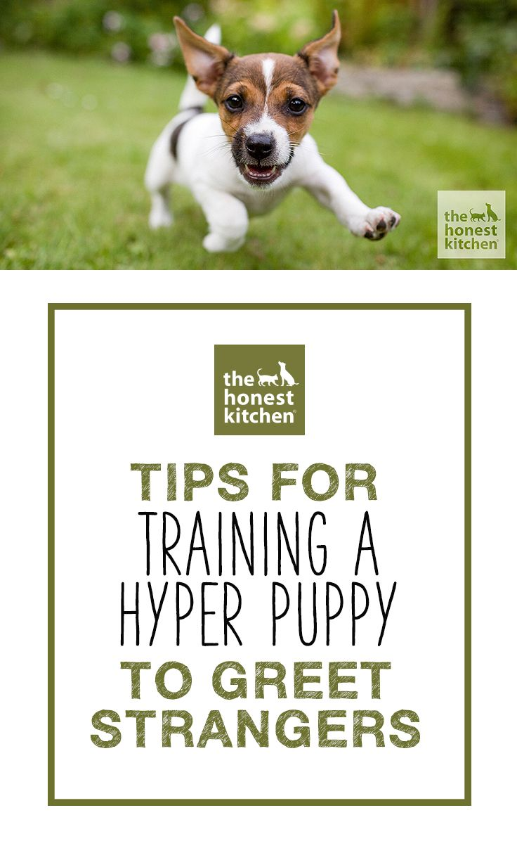 One Of The Most Difficult Tasks When Training A Puppy Is Getting Him To Properly Greet Strangers Here Are Few Tricks Try If Your Rambunctious Pup