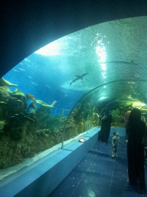 Jeddah Aquarium Life In Saudi Arabia Jeddah City View