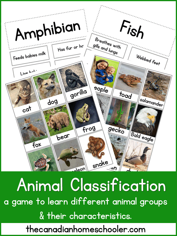 Animal Classification Printable A Matching Game With