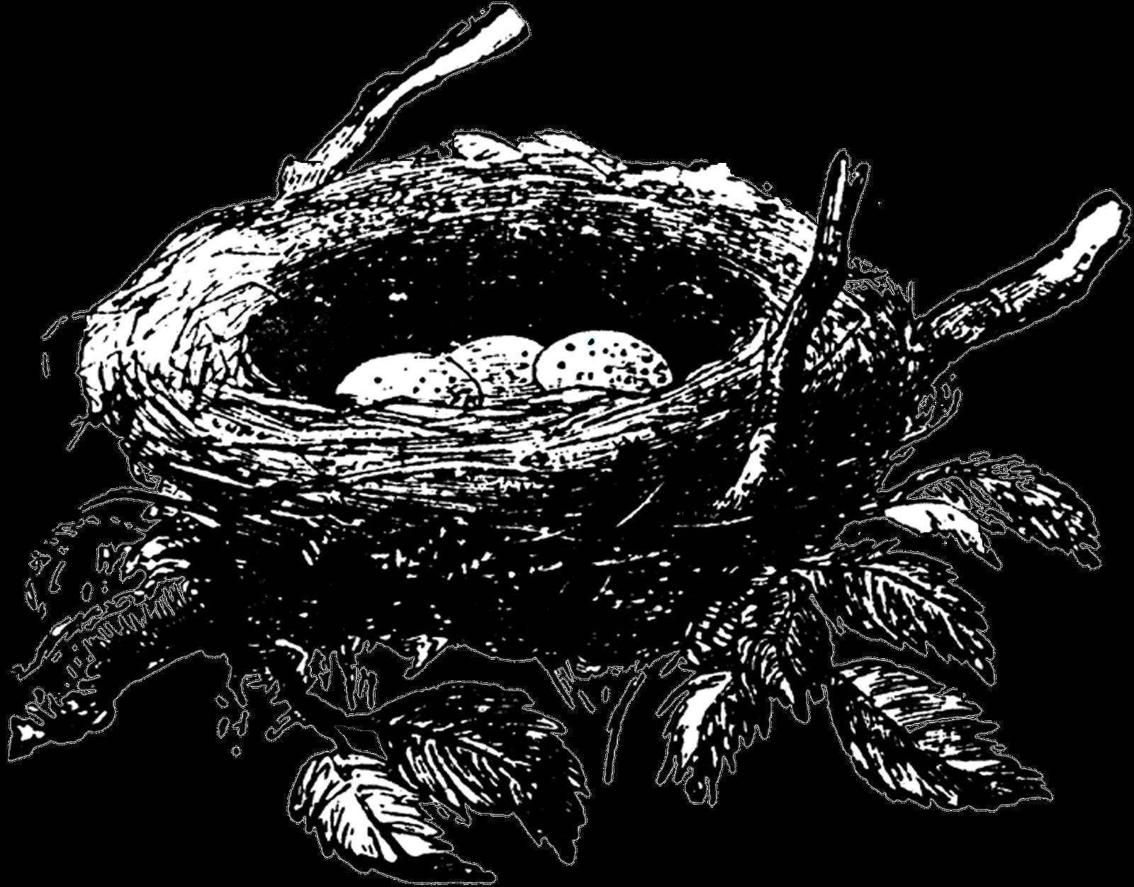Empty Nest Club Nest Art Bird Nests Art Bird Nest