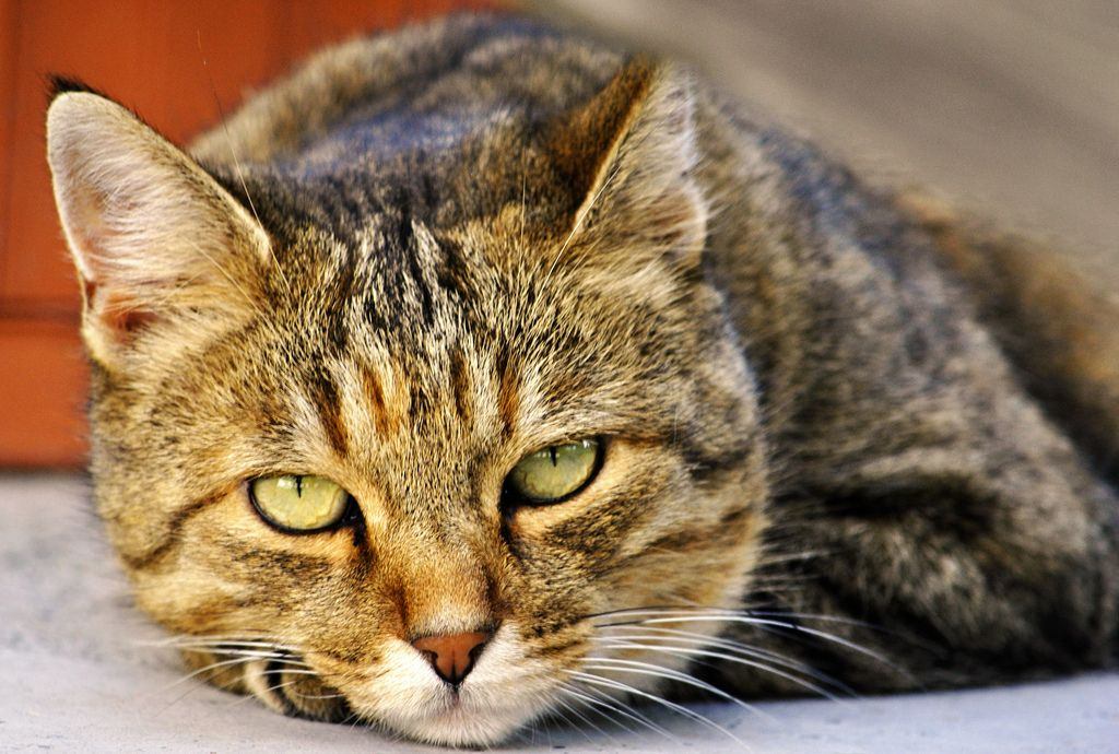 Best cat food for sensitive stomach buyers guide best