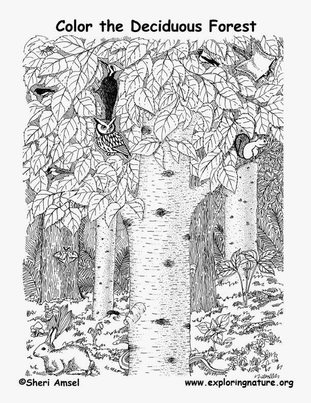 Deciduous Forest Pictures To Print