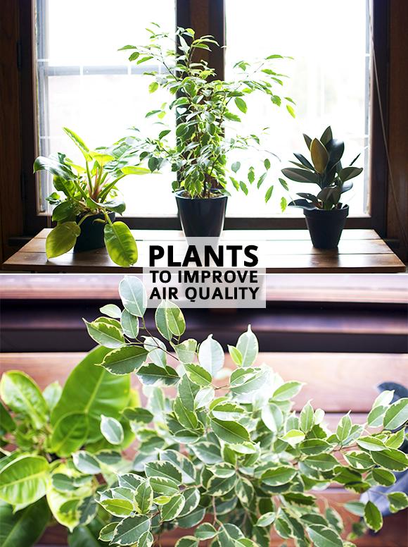 Indoor Plants That Help Improve Air Quality Plants