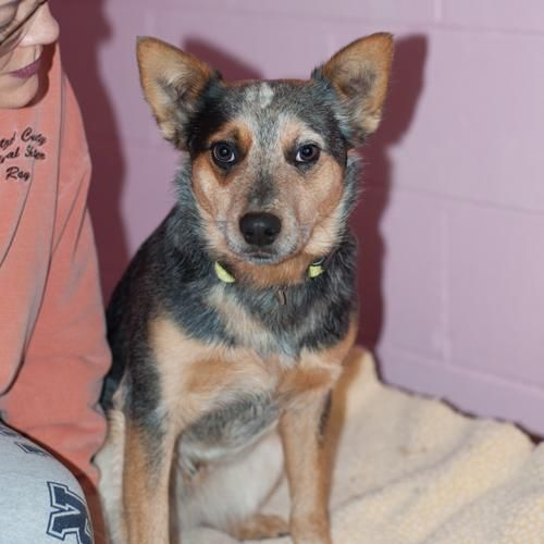 JOEY located in New Martinsville, WV has 3 days Left to