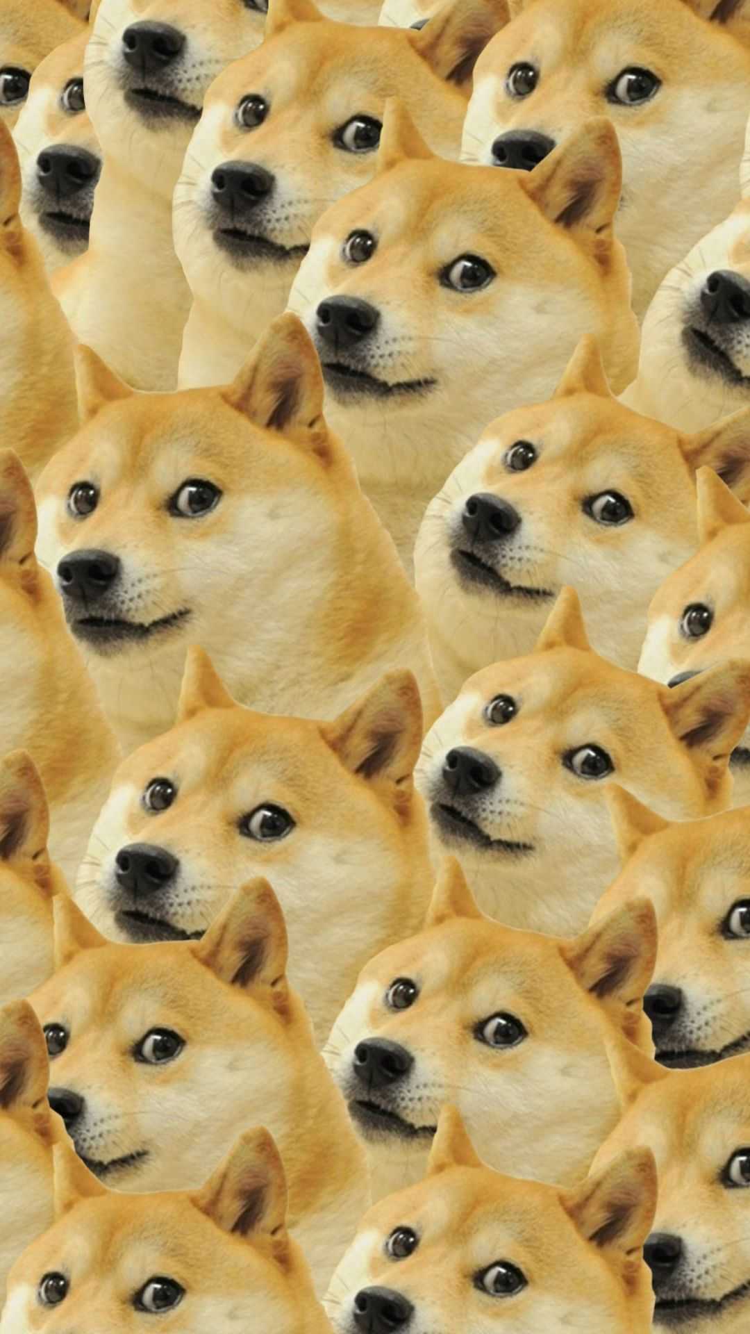 Doge Wallpaper Hd in 2020 (With images) Dog wallpaper iphone
