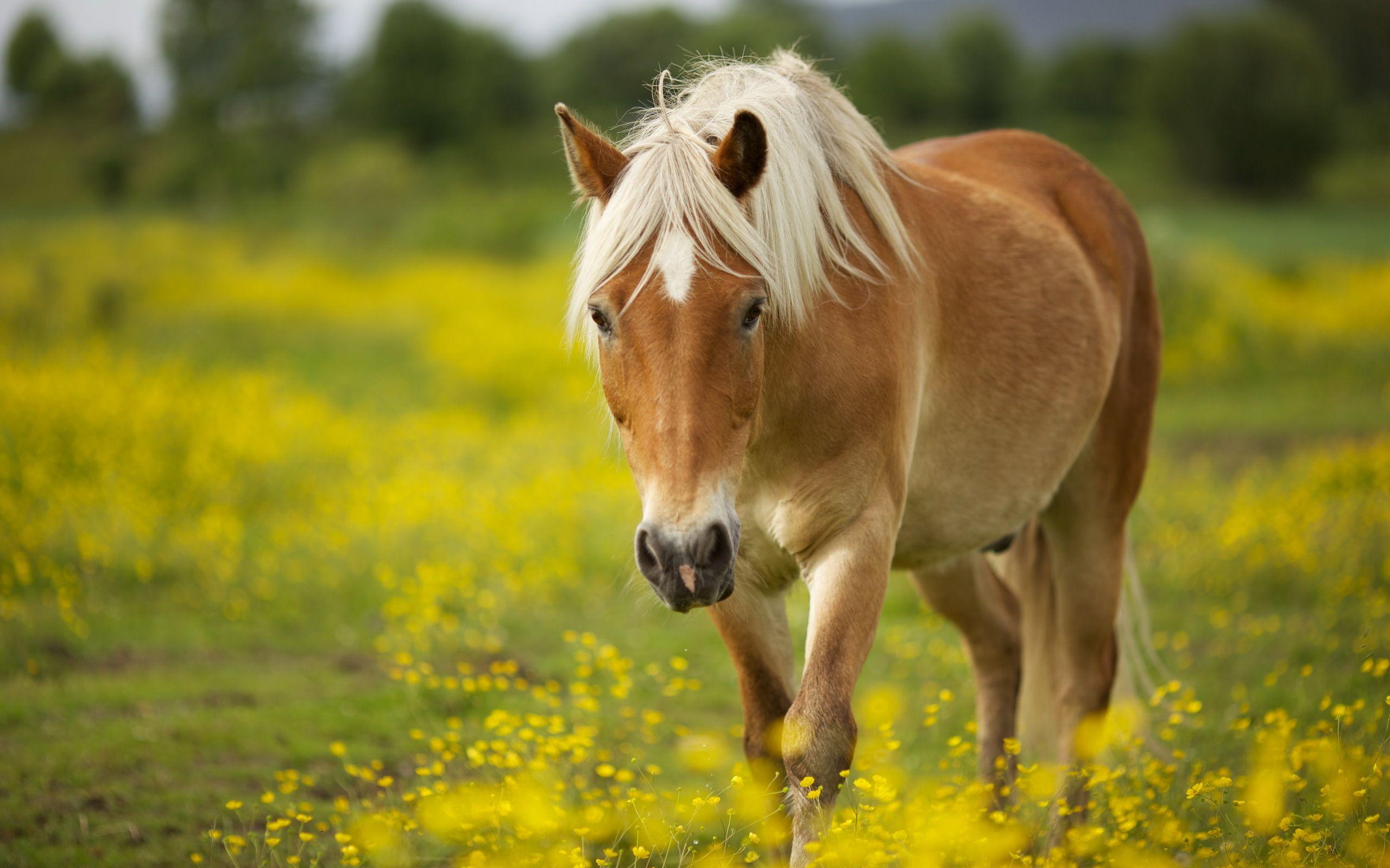 Beautiful Wallpaper Horse Yellow - d9e206300a20372cb49bd4f691b3f8bb  Graphic_644964.jpg