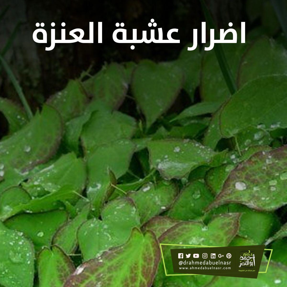 الدكتور احمد ابو النصر Herbs
