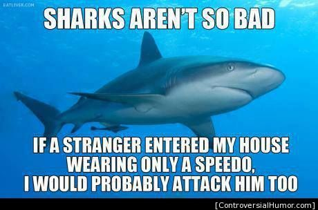 Sharks Aren T So Bad Funny Shark Pictures Sharks Funny Funny Pictures For Kids