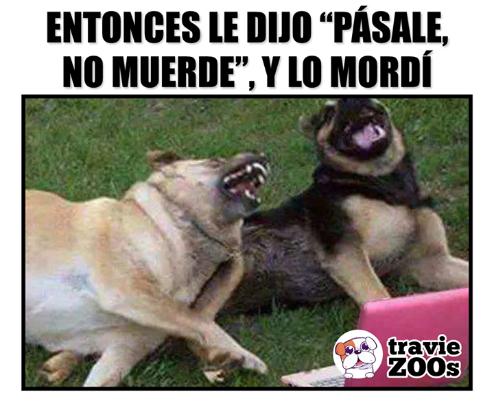 Que Bueno Por Confiado Frases Divertidas Sobre Animales Memes De Animales Divertidos Fotos De Perros Graciosas
