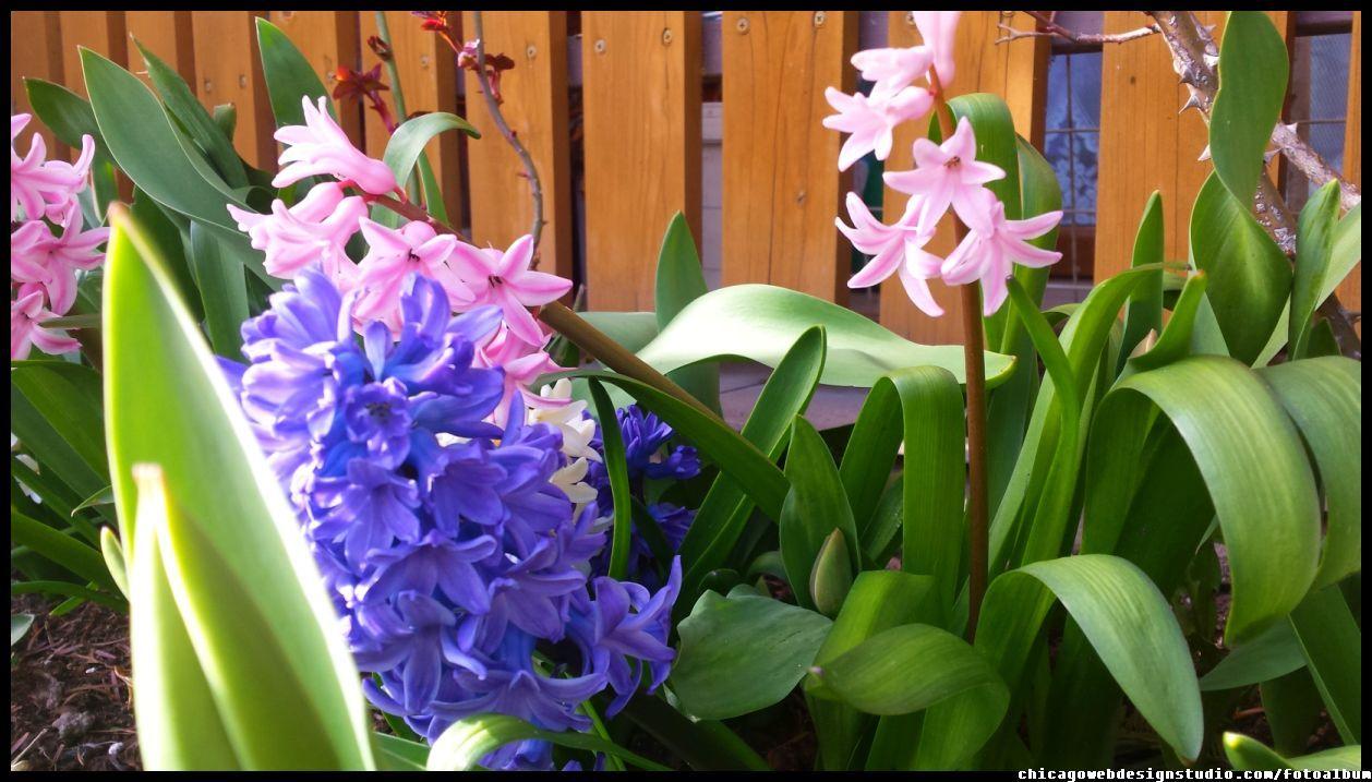 Pin On Kwiaty Flowers