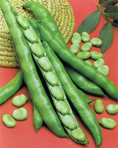 what color are fava beans