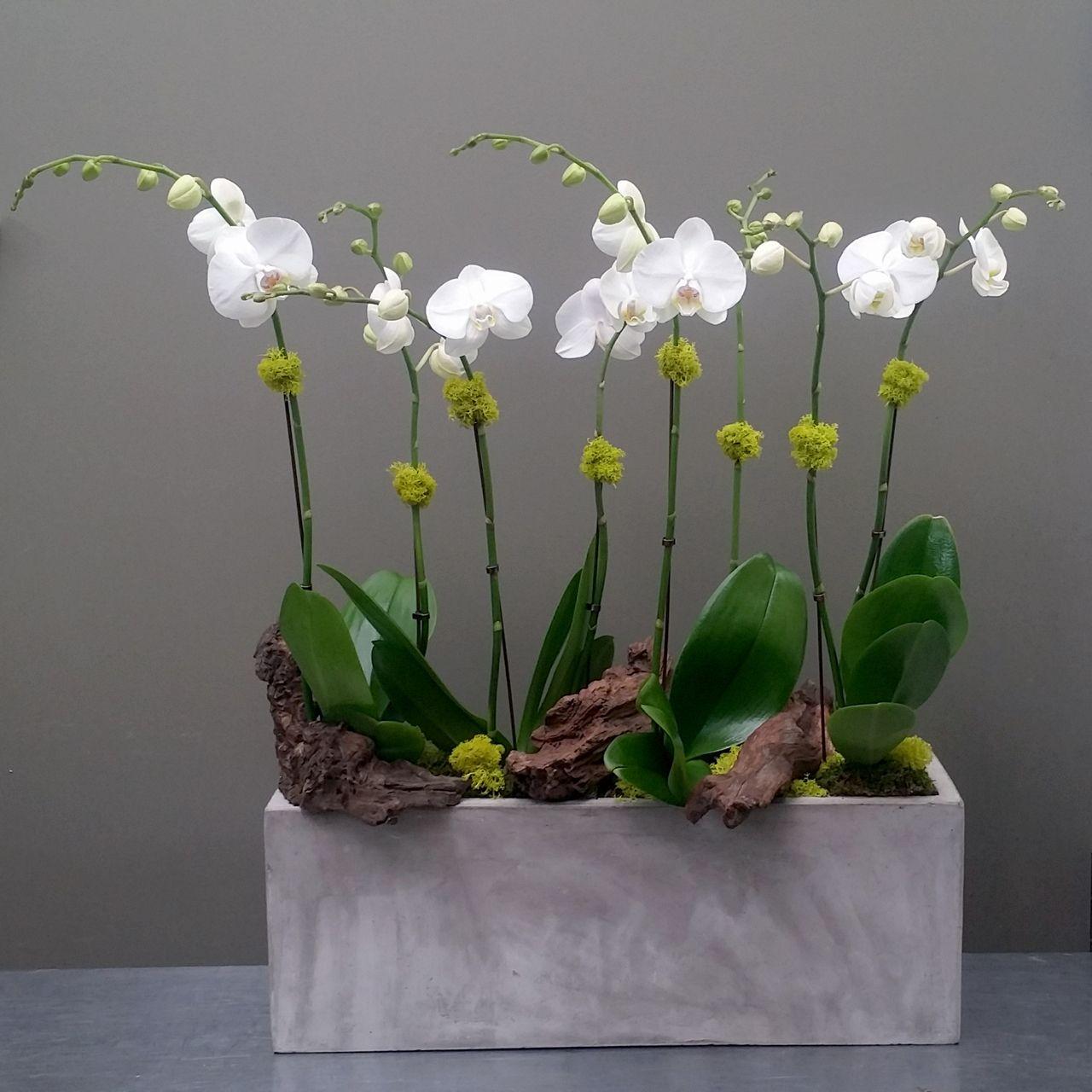Phalaenopsis Orchids in Concrete pot | Orchids | Pinterest ...