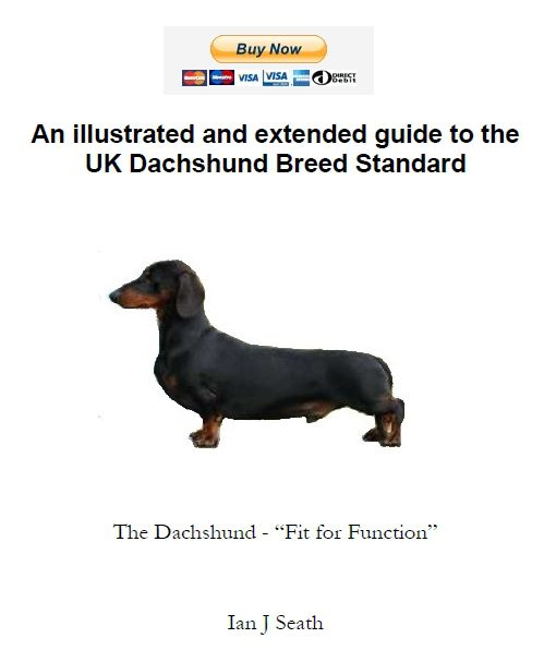 Illustrated Dachshund Breed Standard Dachshund Breed Dachshund