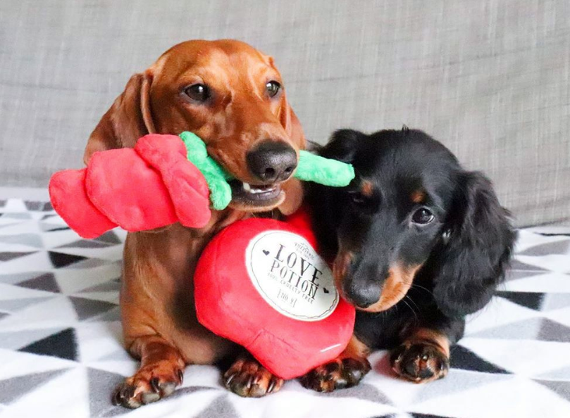 Love Potion & Red Rose Dog Toys i 2020