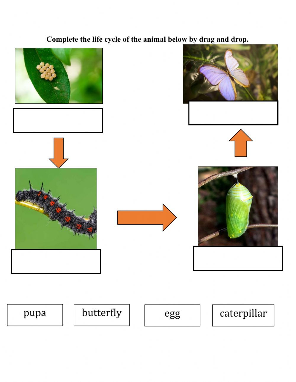 Life Cycle Of Butterfly Interactive Worksheet Butterfly Life Cycle Life Cycles Butterflies Activities