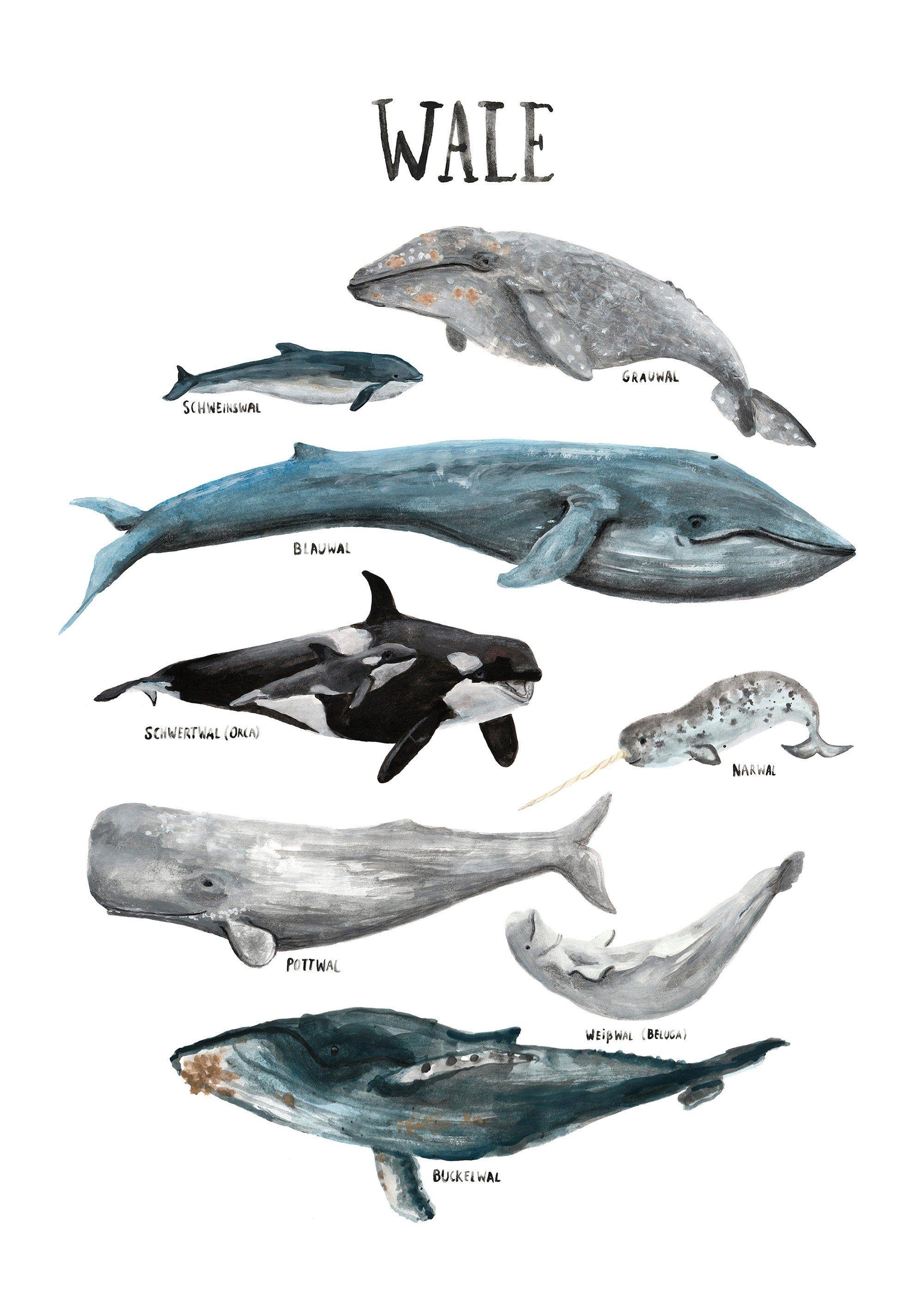 Deutsch Gedrucktes Poster Kinderzimmer Wale Ozean Walfische Meere