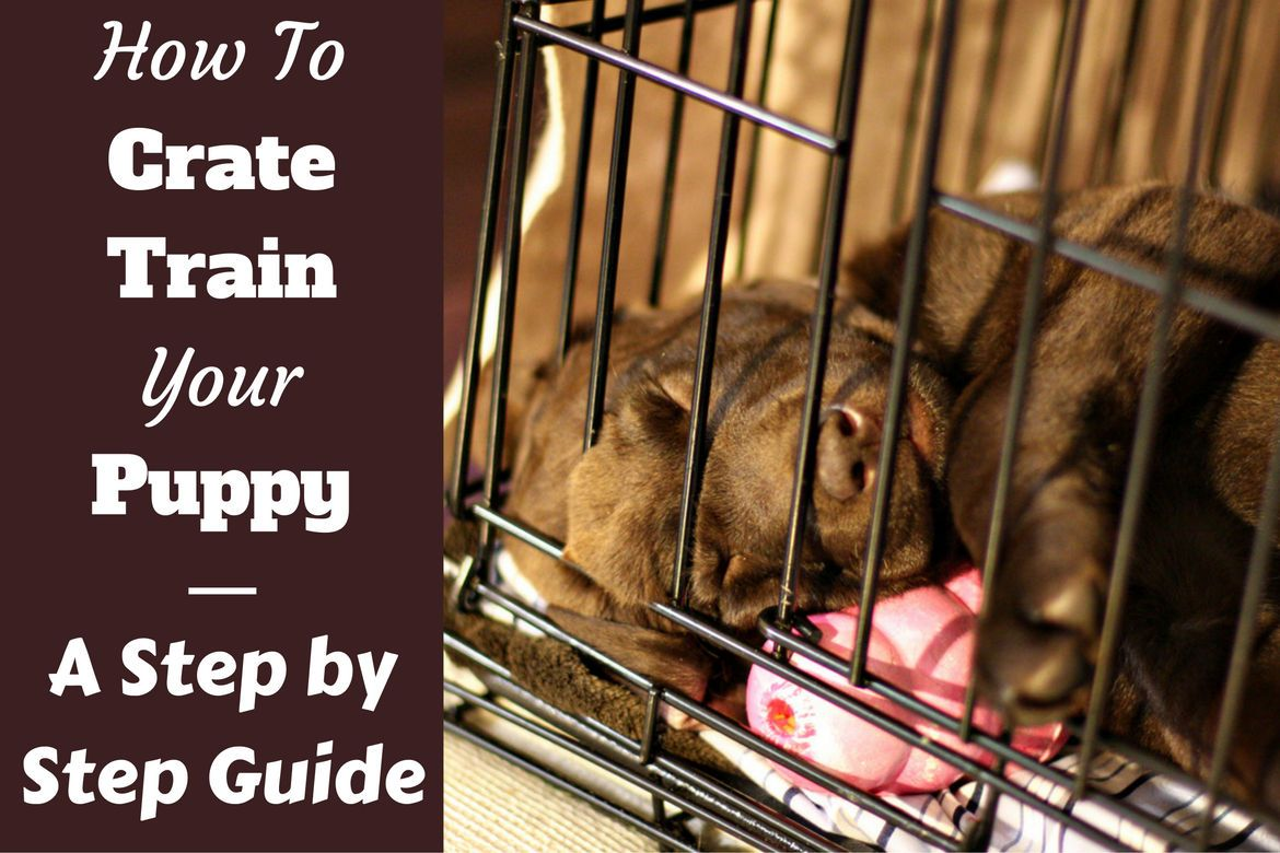 How To Crate Train A Puppy Day Night Even If You Work 2020