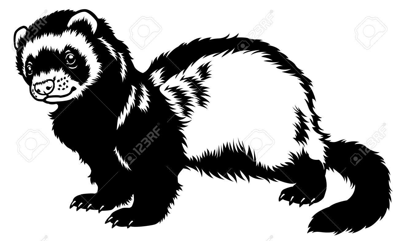 ferret tattoo animal silhouette side view vector art vector illustrations vinyl [ 1300 x 784 Pixel ]