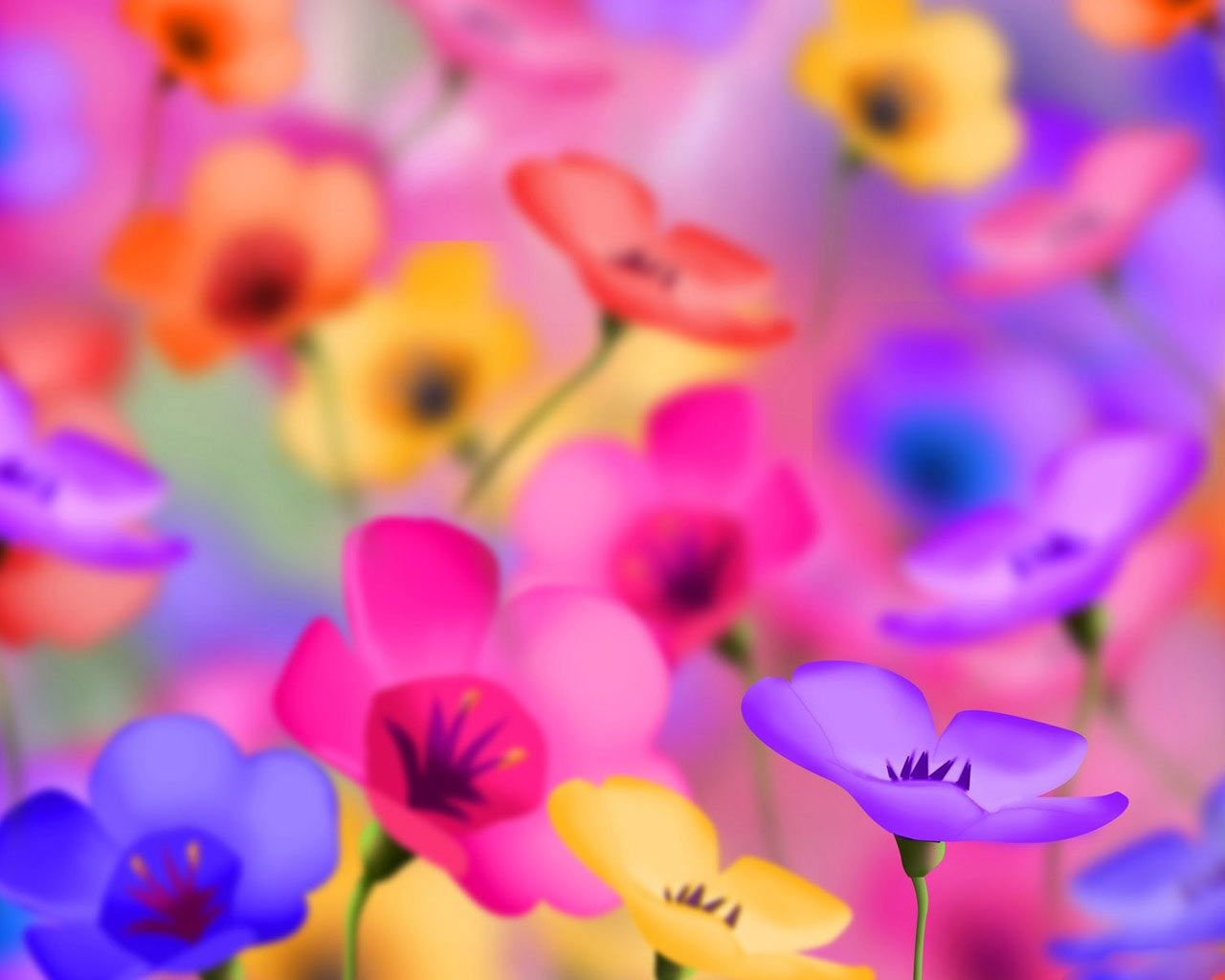 Spring Flowers Wallpaper Hd | Natures Wallpapers | Pinterest ...