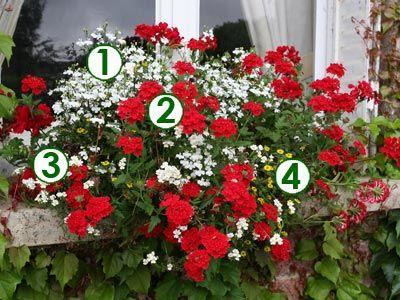 Des fleurs aux fen tres rouge et blanc sc nes de jardins jardin fleurs pour jardiniere - Idee composition jardiniere exterieure ...
