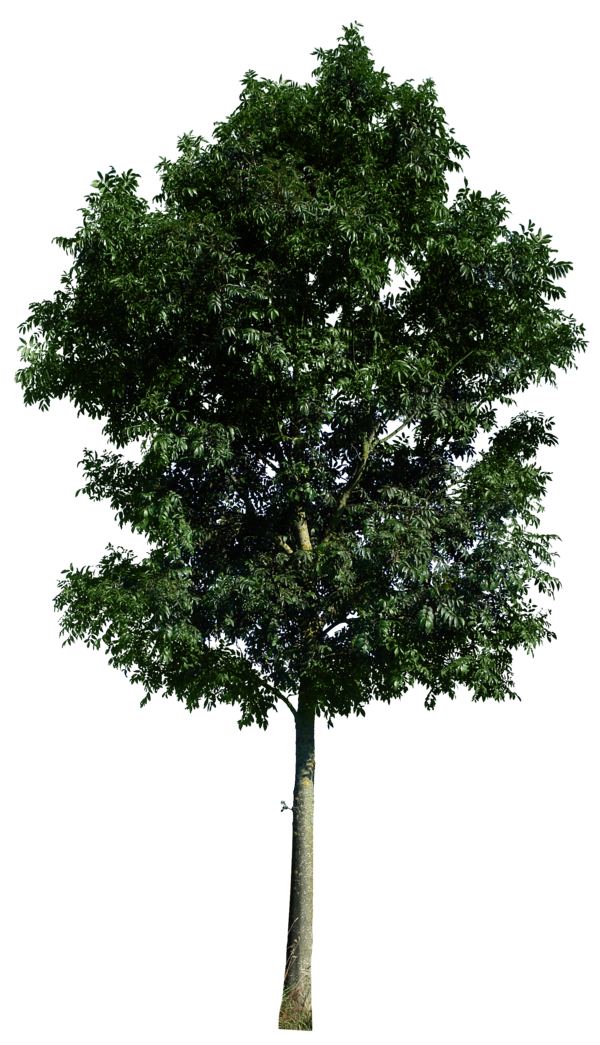 Tree Free Vector Art - (30210 Free Downloads) - Vecteezy