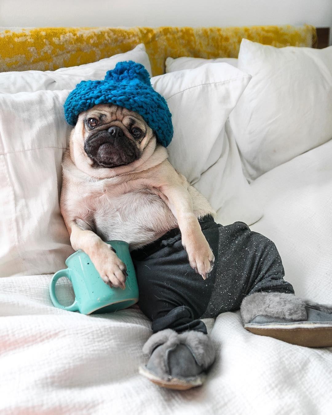 What Working From Home Looks Like Doug Cute Pugs Doug The Pug