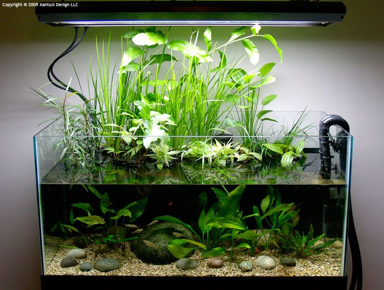 Aquarium setup ideas had trouble growing their plants or for Planted fish tank