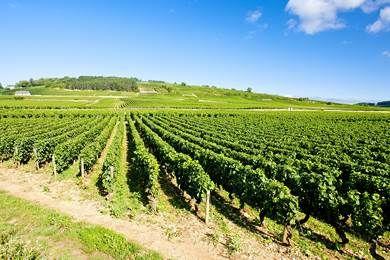 Chateau Pommard, Beaune, Wine Tasting