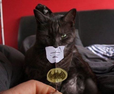 theres a lot of funny cat pictures on the internet but this has got to be my favorites. batman <3 forever