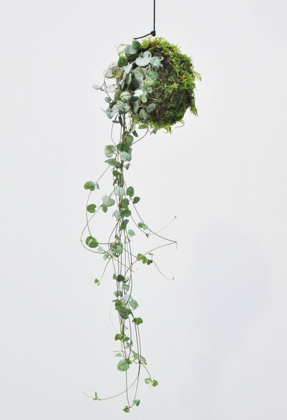 Die 15 besten Zimmerpflanzen für minimalistische Häuser - Holistic Tri Life//Living A Meanigful Active Life #hangingplantsindoor