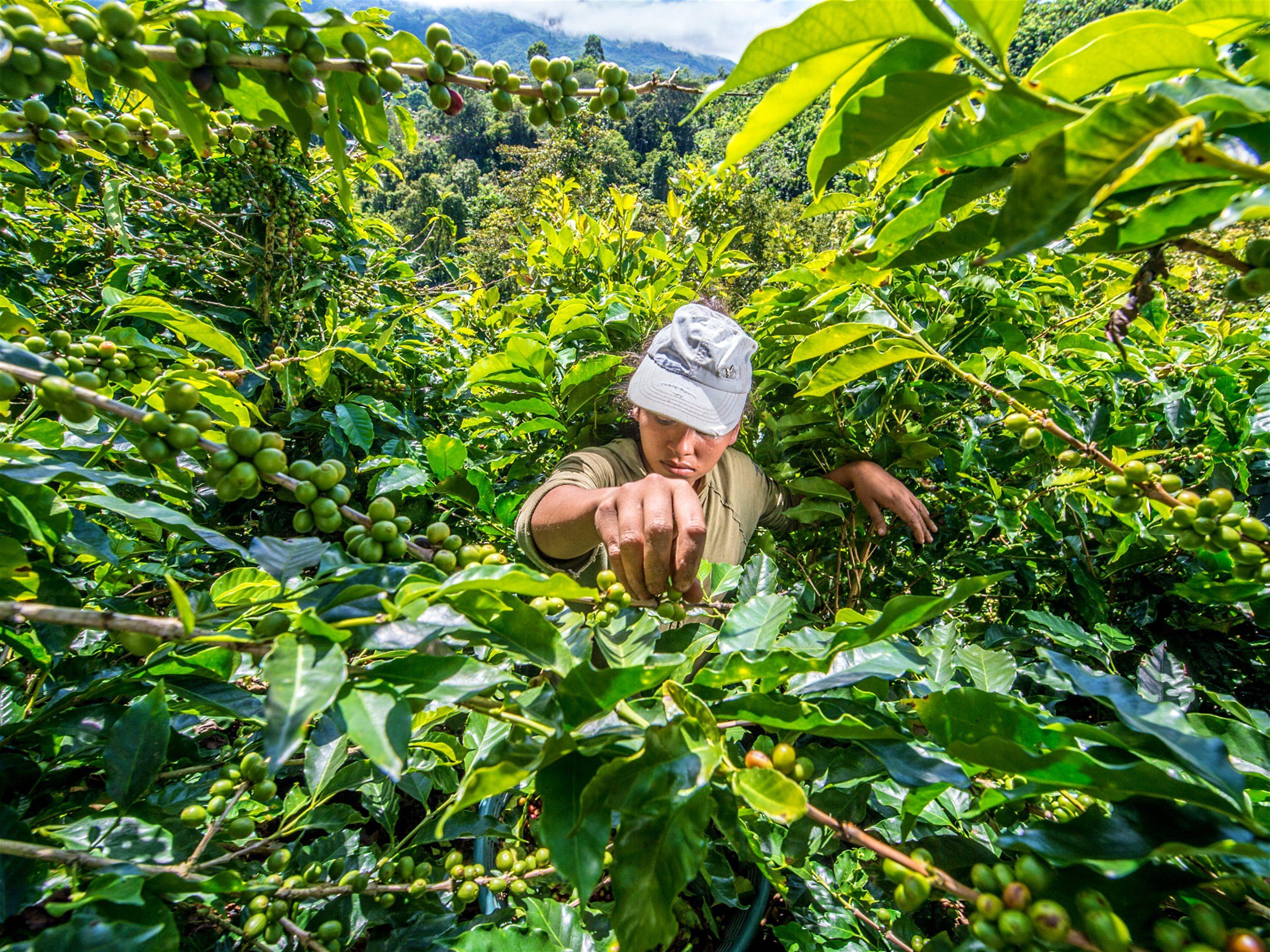 The best coffee destinations around the world Coffee