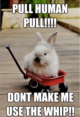 Cute Funny Bunny Memes