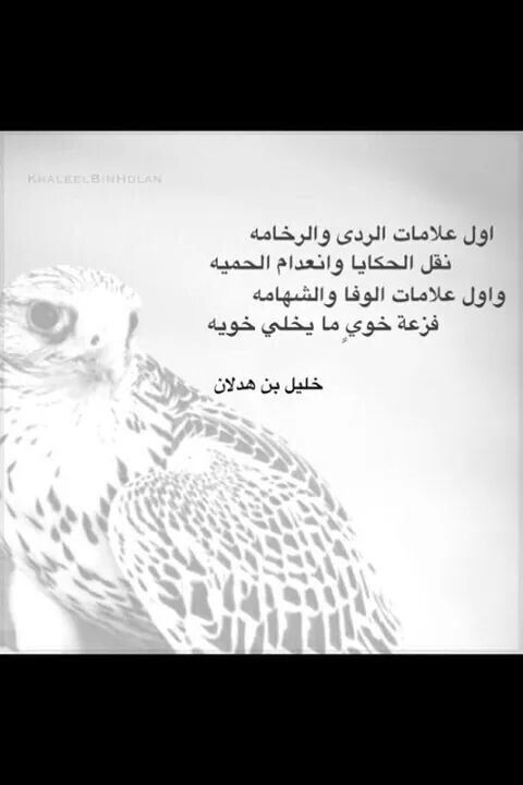 Pin By Beside Crochet On عربي Arabic Owl Animals