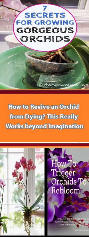 Growing Orchids 101 How to grow orchids for beginners. Easy care orchid types, orchid growing tips, how to keep your orchids happy and much more! Don't be intimidated...give these beautiful and exotic flowers a try. #growingorchids