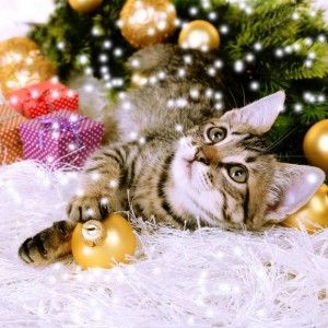 How can you Help a Cat this Christmas  #Cats #Blog #Vets #Kittens #VetMedic #Christmas #PetBlog