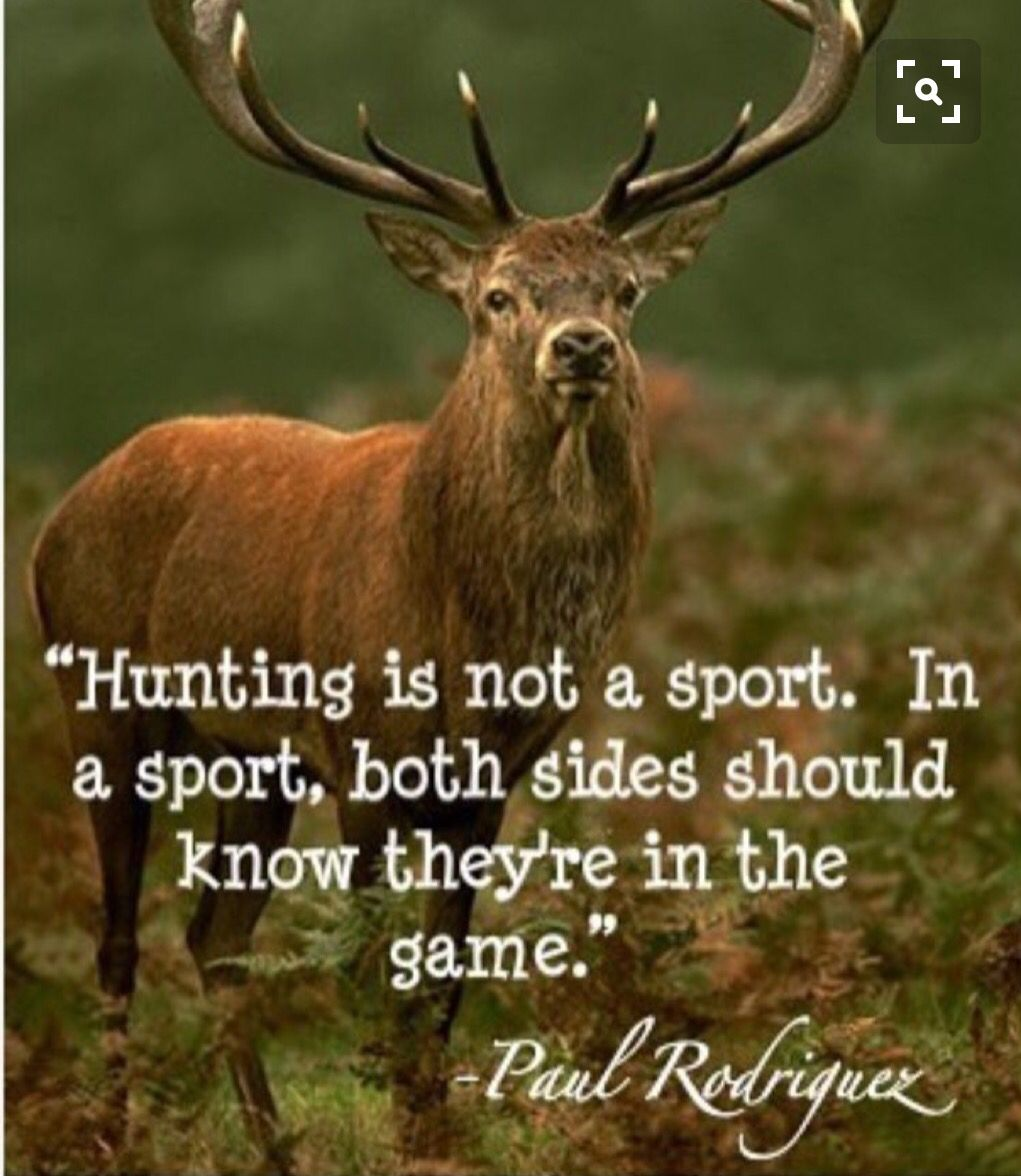 Hunting animal cruelty quotes animal quotes stop