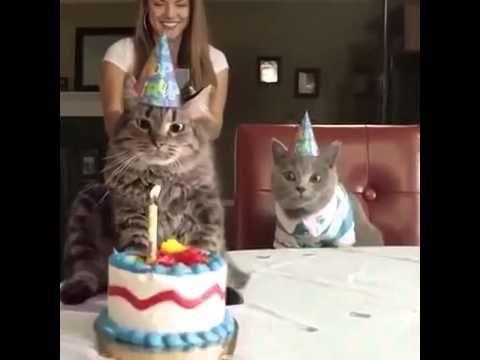 Katzen Geburtstag