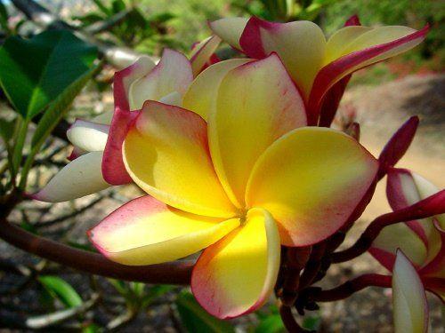 Pin On Natural Beauty
