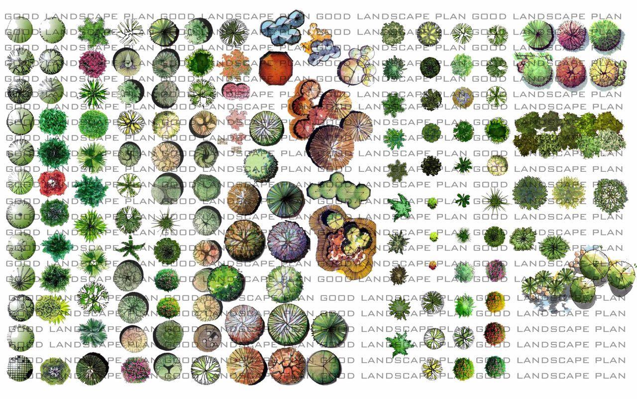 Landscape Plan Symbols Trees And Shrubs Loved Design Pinterest