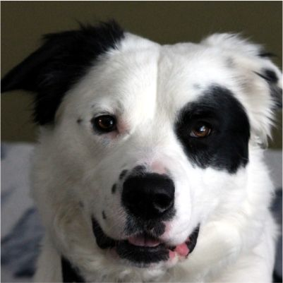 Hull S Haven Border Collie Rescue Is A Volunteer Operated Non
