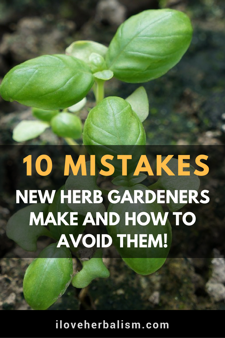 There are a few simple mistakes that many herb newbies make (and I ...