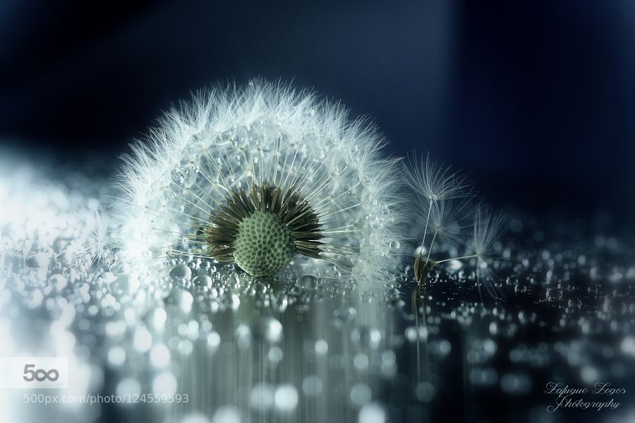 """""""Star eyes when if ever will my lips know If it's me for whom those eyes glow Makes no difference where you are..."""" Lafugue Logos setsMacro Fluff & feathers Copyright Lafugue Logos All Rights Reserved."""